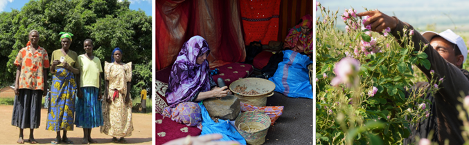 Fair Trade PURITY VISION